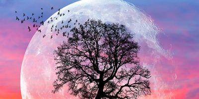 8 April 2020 Volle (Super) Maan in Weegschaal